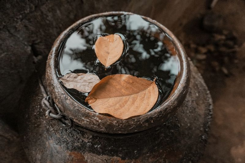 Dried leaves floating on the water in the pottery