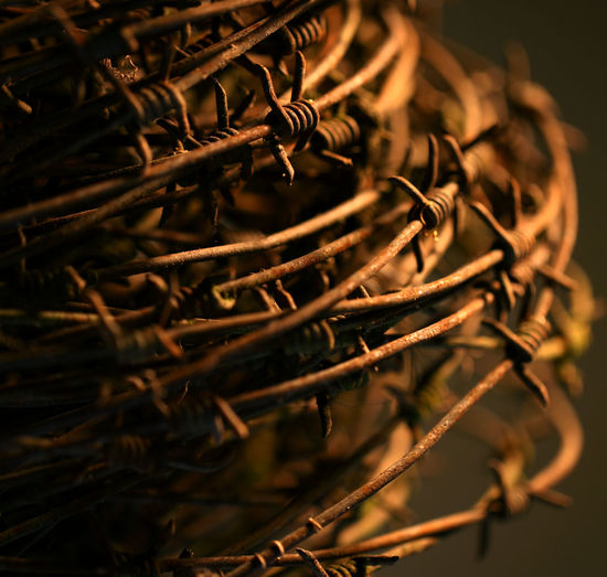 Detail Shot Of Cropped Barbed Wire