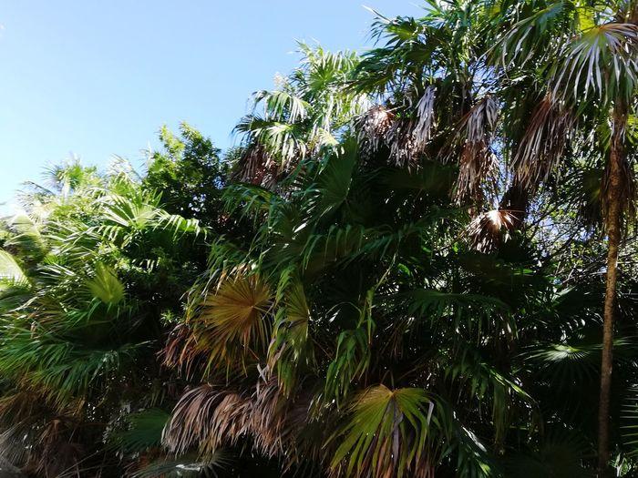 Tree Palm Tree Leaf Sky Green Color