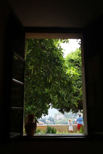 Window Tourists View Balcony Tourism Plant Window Tree Glass - Material Transparent Indoors  No People