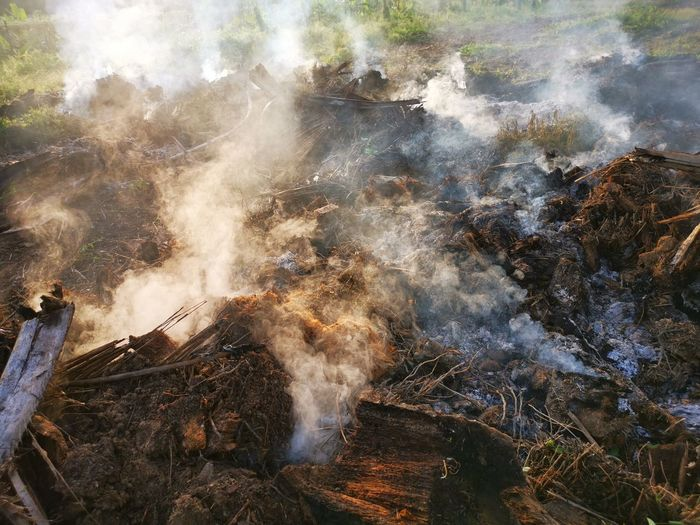 Palm oil slashed tree burning in smoke