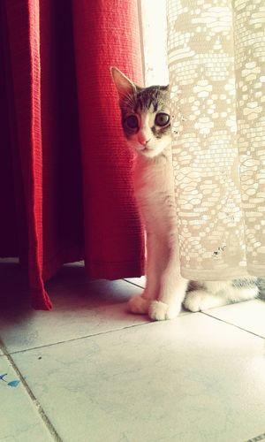Scared Face MyLittleCat 💕 🐱 Akira♡♥♡