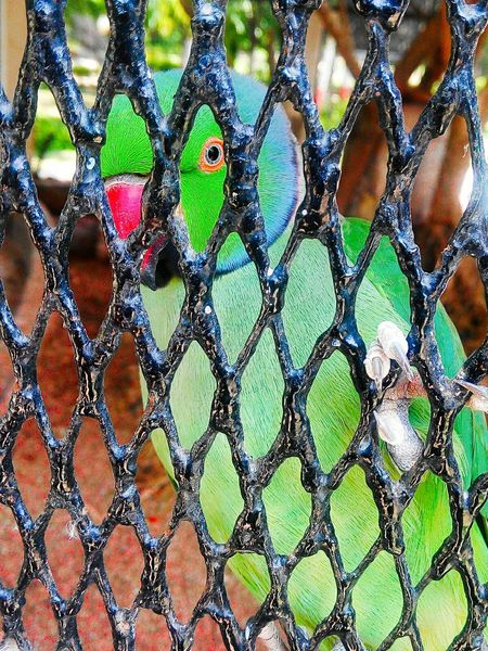 Parrots Parrot Lover .birds .freedom.caged.behind bars