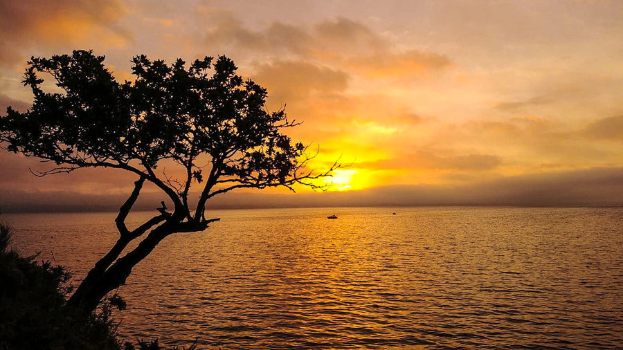 Sky Water Sunset Tranquility Tranquil Scene Beauty In Nature Tree Scenics - Nature Sea Cloud - Sky Plant Nature Horizon Over Water Horizon Idyllic Orange Color No People Dramatic Sky Outdoors