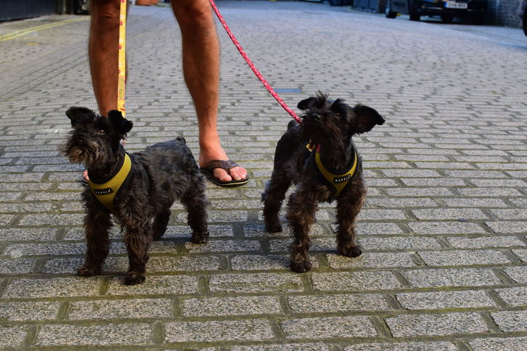 Animals Candid Colour Dogs Hanging Out Happiness Happy Minischnauzer Pets Schnauzer Streetphotography