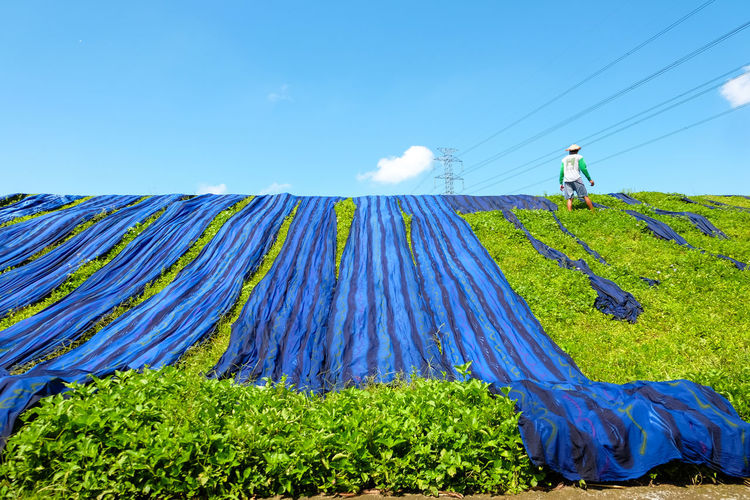 Low angle view of man drying blue fabrics on grassy field against blue sky during sunny day