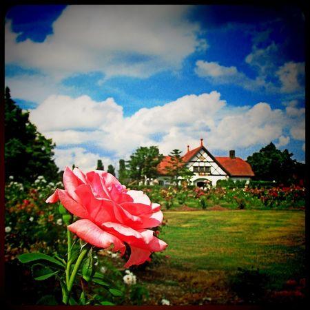 What a Wonderful World Rose Garden Flowers