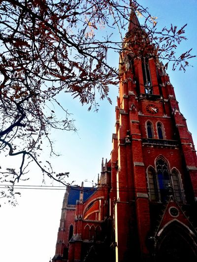 Architecture Bare Tree Blue Branch Building Building Exterior Built Structure Church Clear Sky Day Katedrala Kathedrale Leaves Low Angle View Nature Nebo No People Osijek Osijek, Croatia Outdoors Religion Sky Tall - High Tree Trees