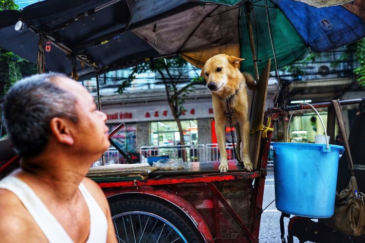 Love in eyes Thailand Travel Dog Connected By Travel
