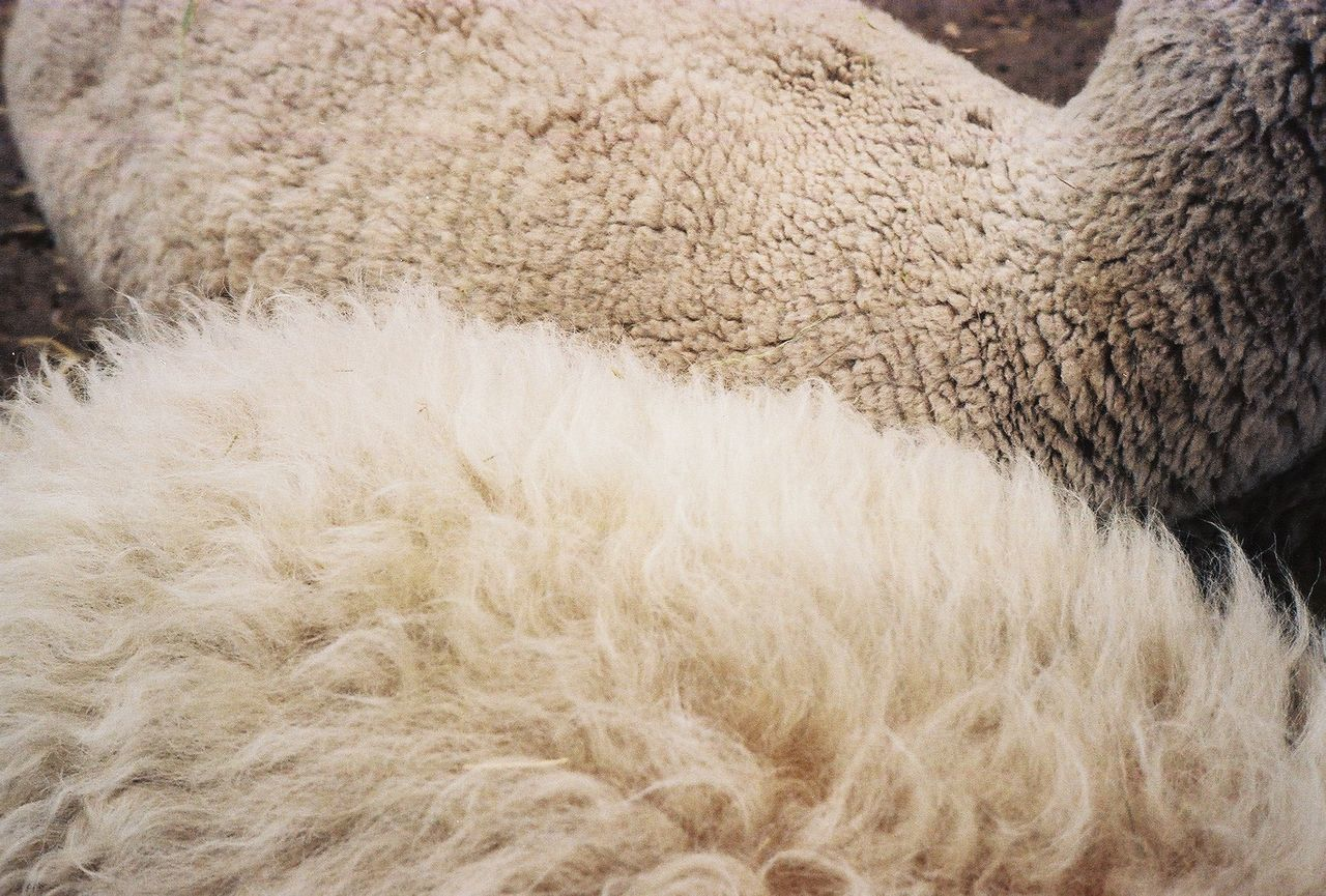 High angle view of sheep standing on field