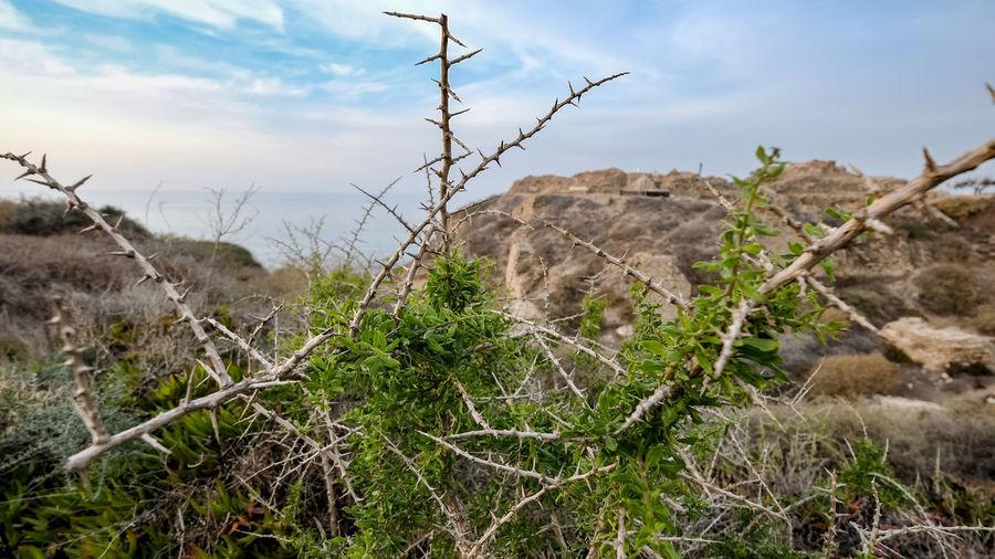 Plants on rocks against sky