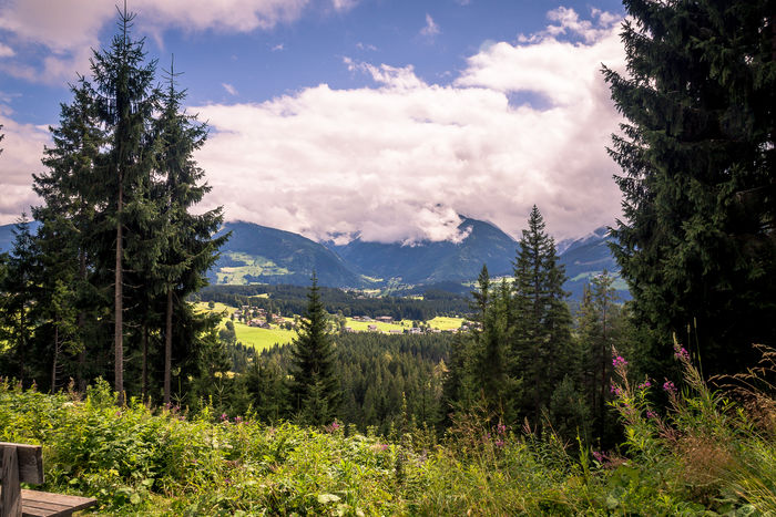 View over Filzmoos Marierichphotography Olympus Tourist Attraction  Beauty In Nature Cloud - Sky Day Forest Grass Growth Landscape Mountain Mountain Range Nature No People Outdoors Pine Tree Plant Scenics Sky Tourism Tourist Destination Tranquil Scene Tranquility Tree Walking