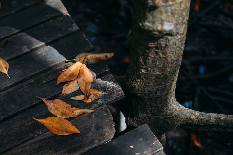 High angle view of autumn leaves on tree trunk