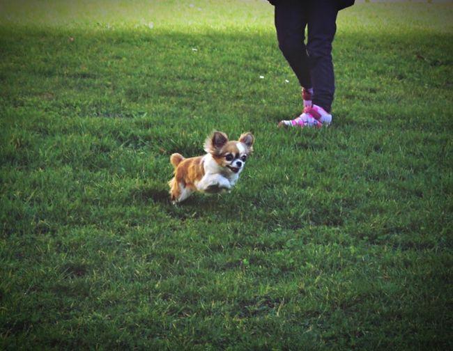 Grass Canine