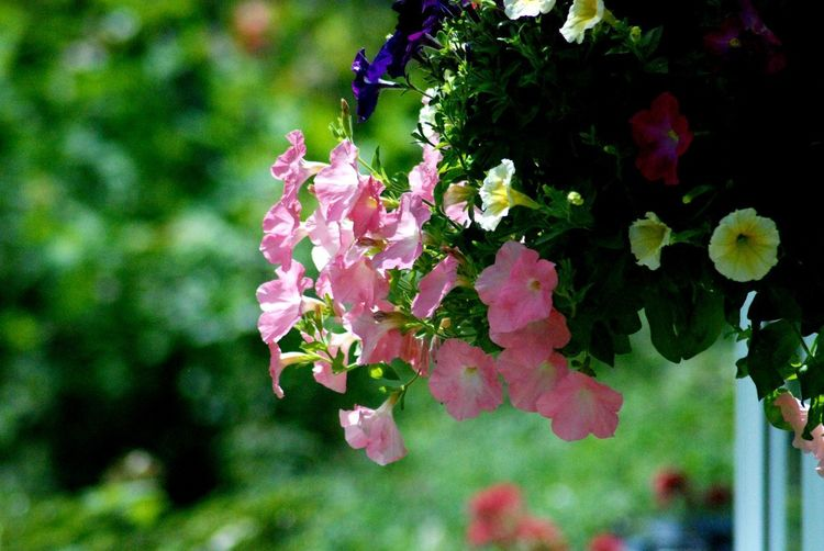 """ Flowers"