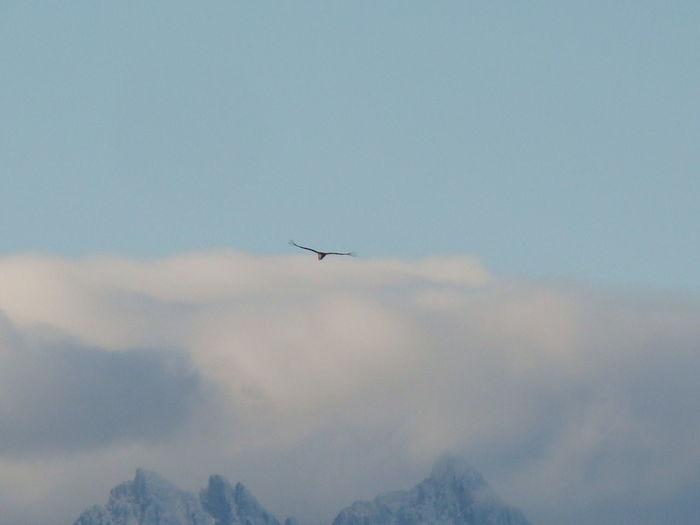 Condor Cóndor