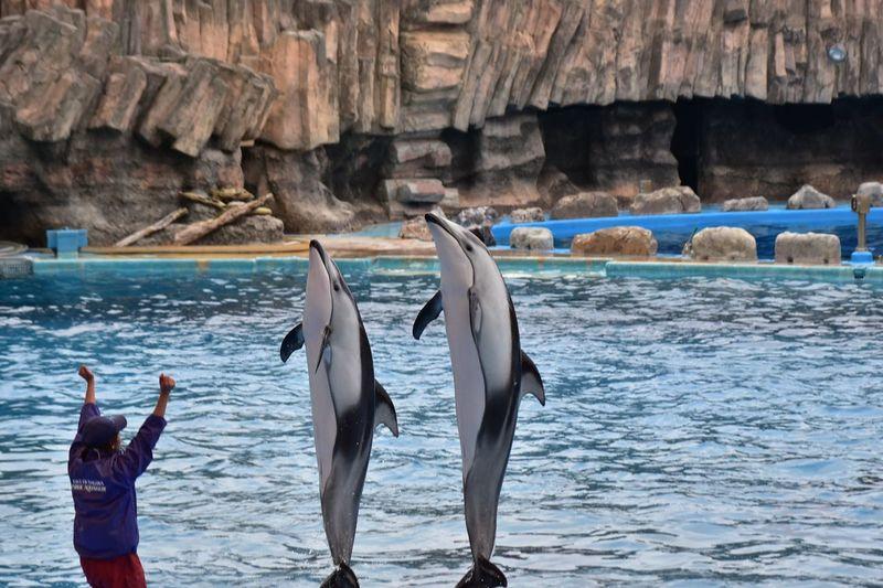 Japan Aichi Nagoya Seaworld Dolphins