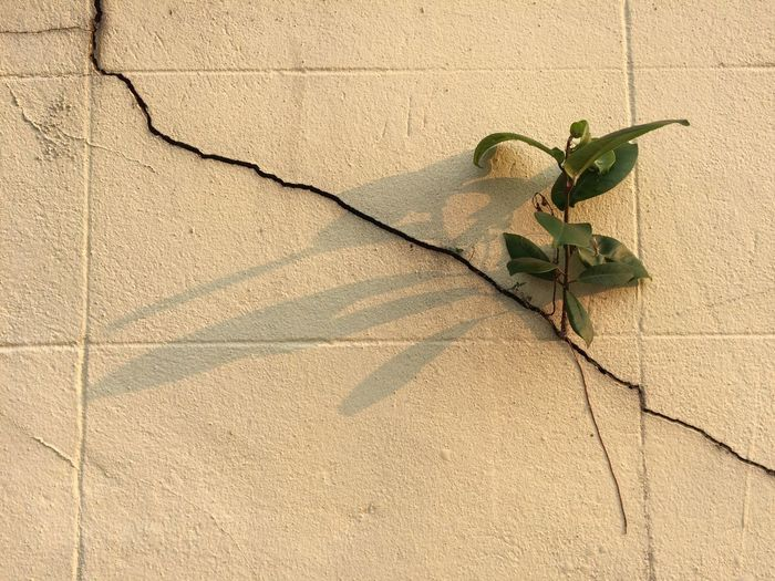 Close-up of ivy on cracked wall