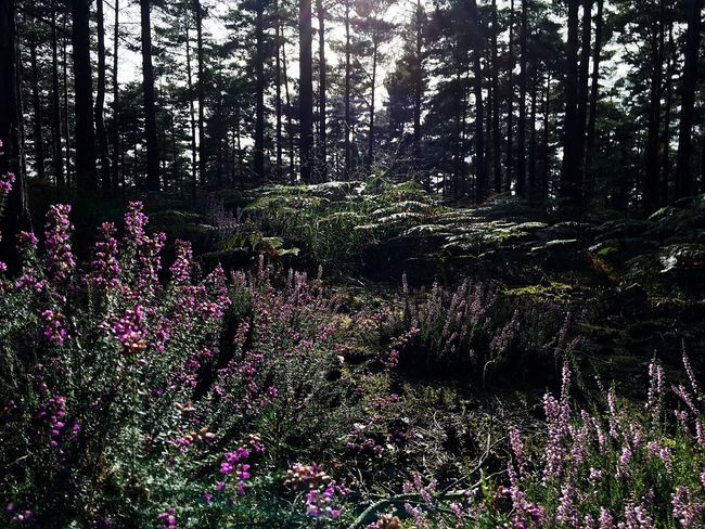 IPhoneography Forest Nature WoodLand Beauty In Nature Tranquil Scene Tree Flower Plant Tree And Sky Tranquility Plant Nature Beauty In Nature Light And Shadow