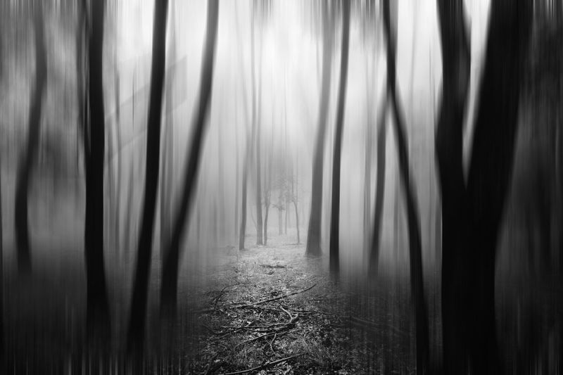 Dark surreal forest Beauty In Nature Blackandwhite Day Direction Environment Fog Forest Land Mystery Nature No People Non-urban Scene Outdoors Plant Scenics - Nature Spooky Surreal Surrealism The Way Forward Tranquility Tree Wald Waldlandschaft WoodLand