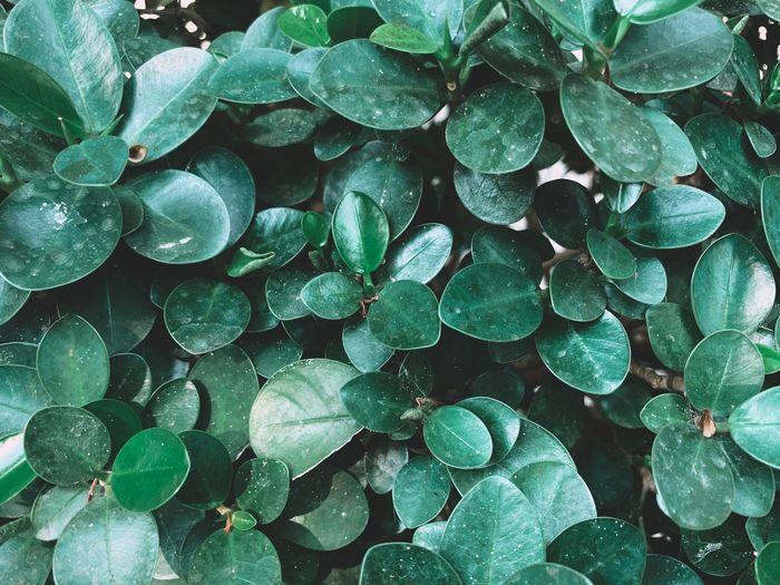 Full frame shot of water drops on leaves