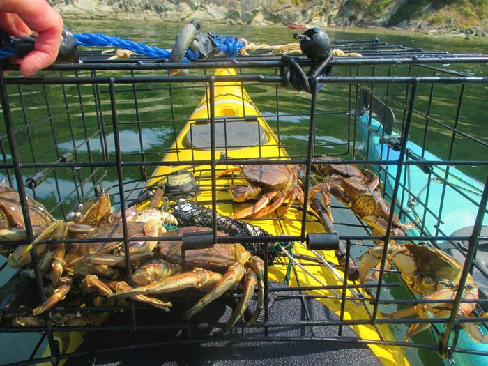 Cropped hand holding cage with crabs on kayak over lake
