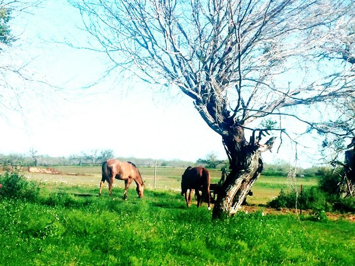 Free Relaxing Taking Photos Tree And Sky Horse Life Horse Love Wild Horses Beautiful Nature