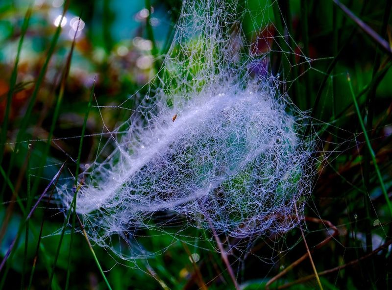 Close-up Softness Spider Web Grass Lightweight Green Color Water Droplets Focus On Foreground Outdoors Dew