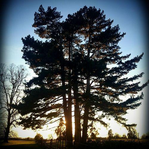 I 💚 trees! TreePorn Hugging A Tree Tree Silhouette Trees I Love Trees Tree Love Tree_collection  Tree And Sky Treemendous Treetastic