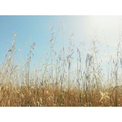 In the tall grass. VSCO Vscocam Lastrampas SanRamon california hiking ebrpd