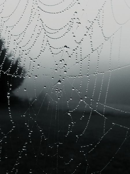 Black And White Photography Spider Web Spiderweb In Morning Dew Fragility Beauty In Nature Outdoors Streamzoofamily Indiana October Morning Light Streamzoo Family Darkness And Light Snapseed Nature Focus On Foreground Silhouette Foggy Morning Fogporn Droplets Droplets On A Spiderweb Nature