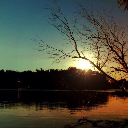 Maybe these branches are just resting. It's not easy to know what is life or death. Meanwhile, for sure there is beauty. Trees EyeEm Nature Lover Sunset Tadaa Community