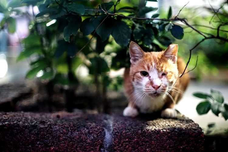 Neko 街貓 Animal