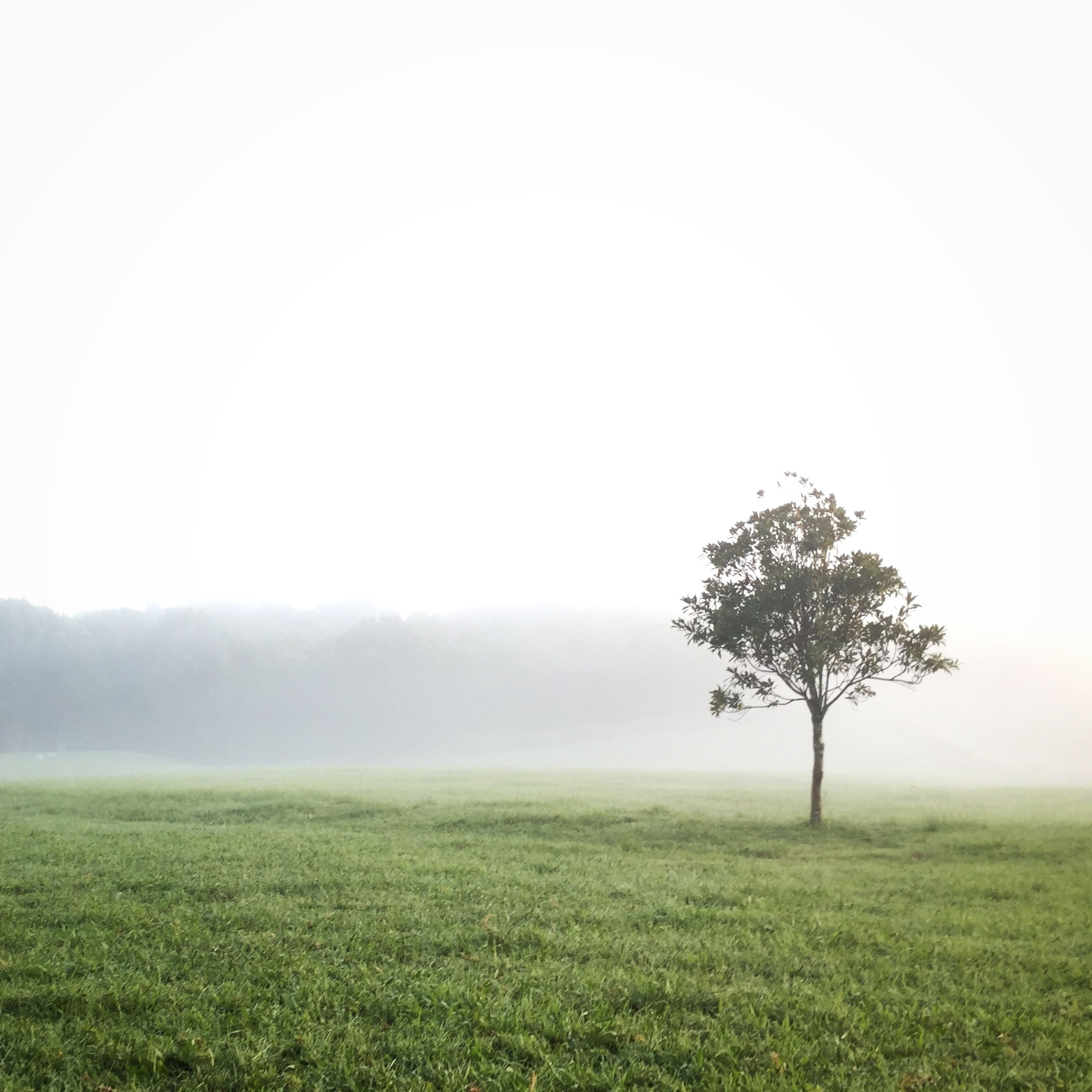 fog, tranquil scene, tranquility, foggy, field, landscape, grass, beauty in nature, scenics, nature, tree, copy space, growth, weather, green color, grassy, sky, non-urban scene, idyllic