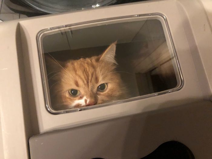 Portrait of cat seen through car window