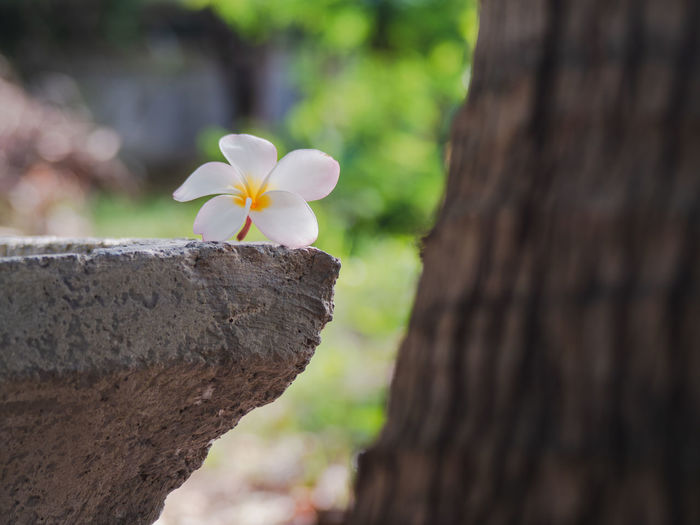 Close-up of flowering plant against tree trunk