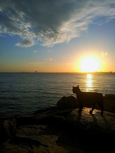 EyeEm Selects EyeEm Nature Lover EyeEm Best Shots Cat EyeEnOnInstagram Sunset Water Sea Sunset Beach Sunlight Sun Swimming Reflection Summer City Seascape Coastline Horizon Over Water Calm Rocky Coastline