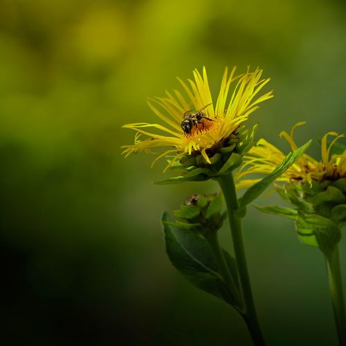 Light Macro Photography Nature_collection Nature Photography Spider Sunlight Wildlife & Nature Beauty In Nature Bee Close-up Flower Flower Head Flowering Plant Green Color Insect Light And Shadow Macro Nature Outdoors Petal Plant Pollination Wild Wildlife Yellow