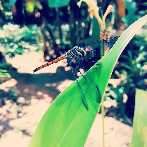 Xiaomiclick_id ,Xiaomipics ,Redmi1s Nature Dragonfly