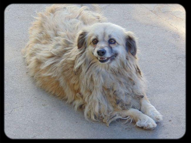 Happyness Happydog Valparaíso perrito feliz (: