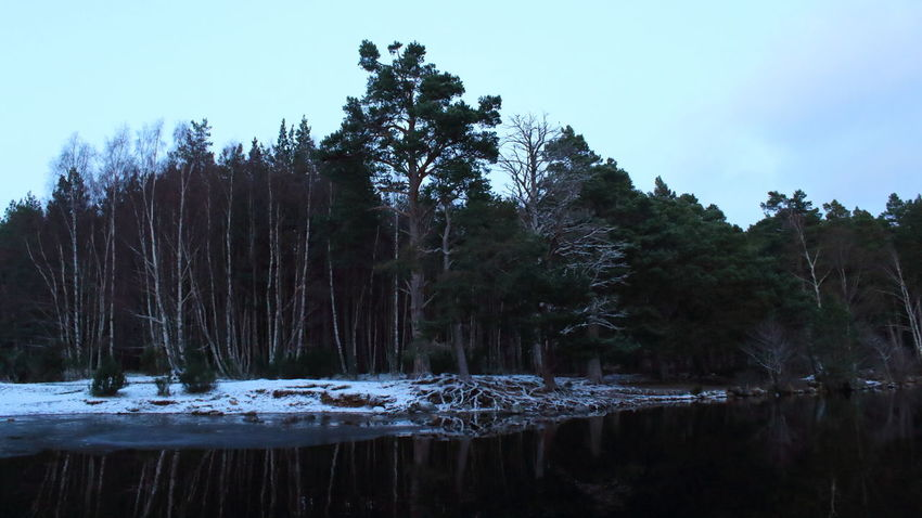 Shades Of Winter Loch  Loch An Eilein Scotland Beauty In Nature Day Forest Growth Nature No People Outdoors Roots Scenics Sky Snow Tranquil Scene Tranquility Tree Water Waterfront