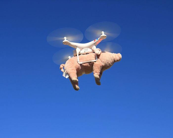 The swine flew Flyingpig Drone  Cape Cod Tadaa Community