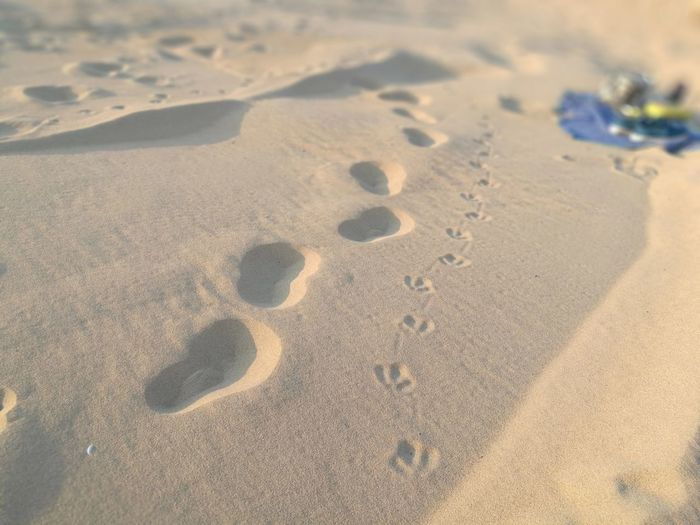 walking with wildlife Sand Footprints In The Sand Animal Tracks No People Huaweiphotography Bird Tracks In The Sand People And Bird Tracks Backgrounds Close-up Animal Track