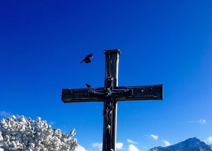 Neighborhood Map Low Angle View Blue No People Day Direction Guidance Animals In The Wild Animal Themes Weather Vane Outdoors Bird Clear Sky Sky Nature Perching Cross