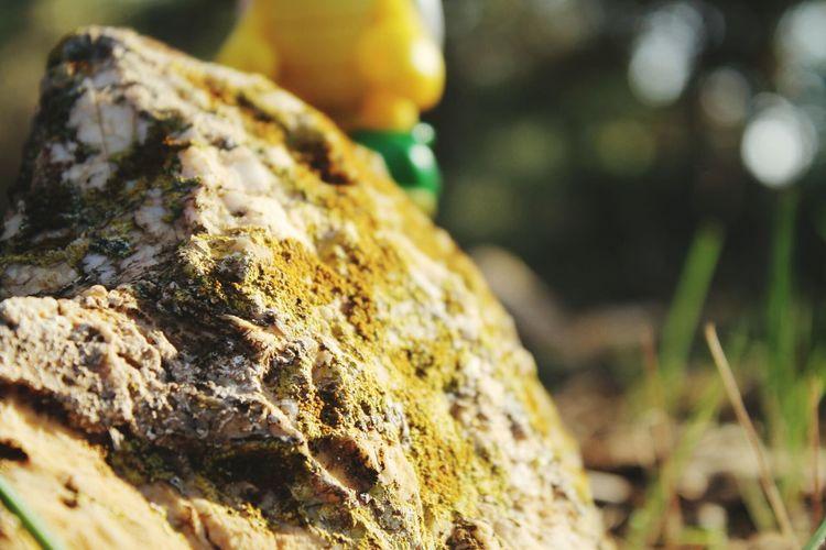 Koopa Troopa Nature Landscape Forest