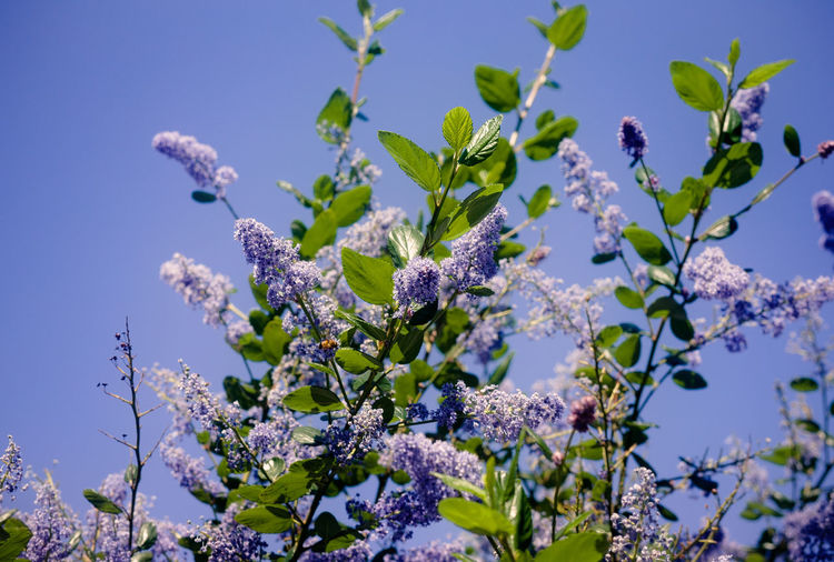 Low angle view of flowers blooming on tree against sky