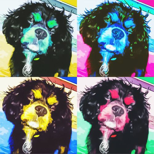 Cavalier King Charles Spaniel Warhol Inspired Pets Dog Domestic Animals Collage Animal Themes Multi Colored Close-up