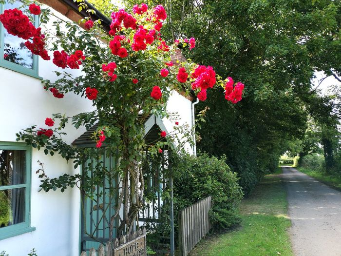 Flowering plants and trees by building