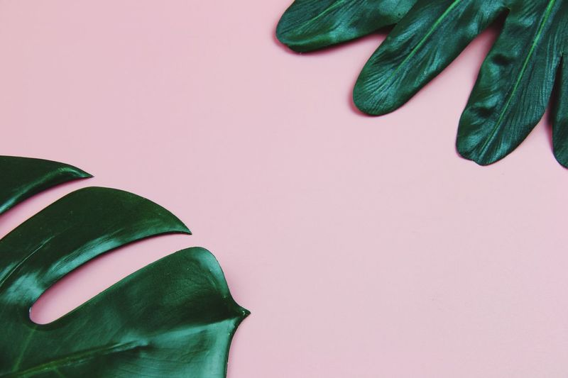 High Angle View Of Plants On Pink Background