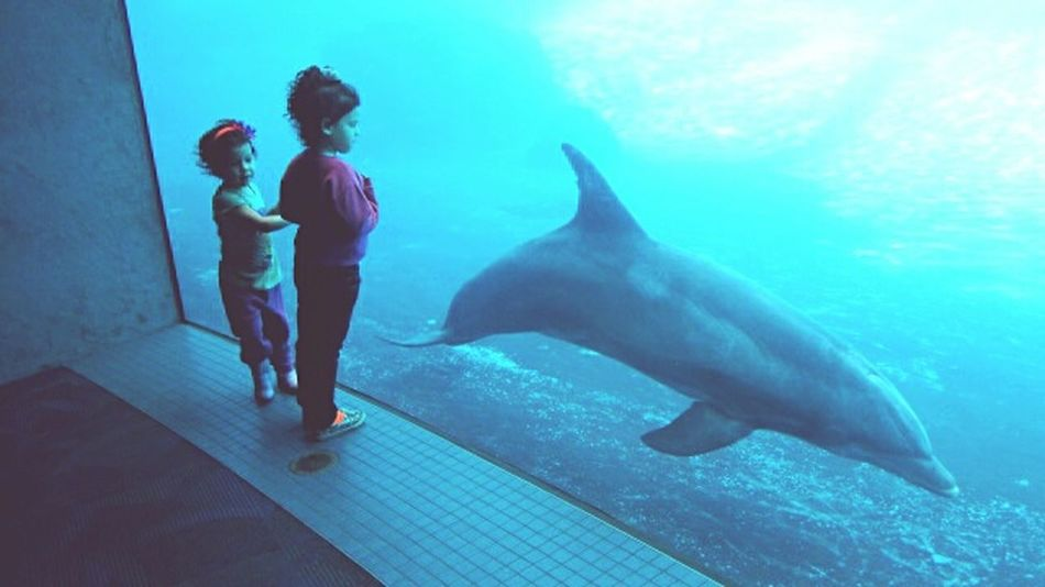 Mesmerized by the graceful dolphin. Dolphin Dolphin Watching  DolphinShow Enjoying Life Kidsphotography Pastel Power Taking Photos Getting Inspired Animal Love Animal Photography Light And Shadow Learn & Shoot: Single Light Source Share Your Adventure Travel Photography Beautiful Throughmyeyes Aquarium Aquarium Life
